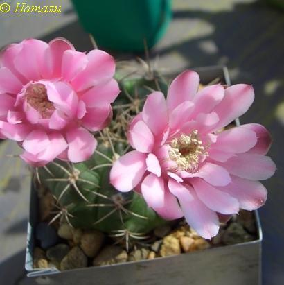Цветы плоды семена